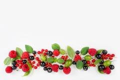 各种各样的新鲜的夏天莓果 成熟莓、无核小葡萄干、鹅莓、薄菏和蓬蒿叶子 免版税库存图片