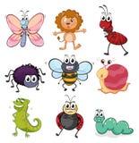 各种各样的昆虫和动物 库存例证
