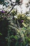 各种各样的有利愈合的草本在一个地方 草本的早晨汇集 免版税库存图片