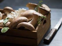 各种各样的未加工的蘑菇输入一个木盘子 免版税库存照片