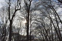 各种各样的树在森林里 库存照片