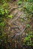 各种各样的树根源于与有些叶子的棕色土壤 免版税图库摄影