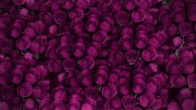 从各种各样的桃红色玫瑰的背景 皇族释放例证