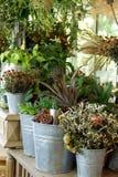 各种各样的植物和干燥花在锌用桶提 图库摄影
