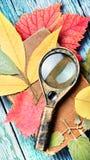 各种各样的植物被按的干干燥标本集  免版税库存照片