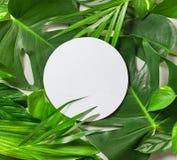 各种各样的热带叶子和白皮书框架 免版税库存照片