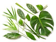 各种各样的热带叶子 免版税库存照片