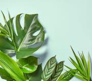 各种各样的热带叶子 免版税图库摄影
