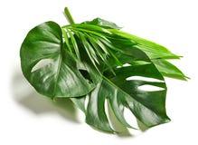 各种各样的热带叶子 库存照片