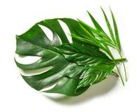 各种各样的热带叶子 免版税库存图片