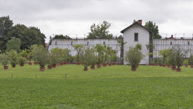 各种各样的生长在罐的树和植物室外 图库摄影