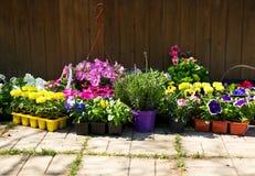 各种各样的盆的花 免版税库存照片