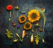 各种各样的秋天植物和花在黑暗的葡萄酒背景,顶视图 库存照片