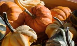 各种各样的秋天菜 免版税库存图片