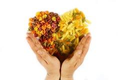 各种各样的种类色的未加工的意大利面团秋天在开头手上在白色背景,顶视图,从食物, o的华伦泰心脏 库存图片