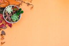 各种各样的种类一个罐头设置的多汁植物在与干叶子的纸板 库存图片