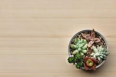 各种各样的种类一个罐头设置的多汁植物在与干叶子的纸板 免版税库存照片