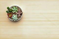各种各样的种类一个罐头设置的多汁植物在与干叶子的纸板 免版税库存图片
