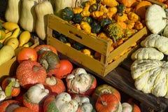 各种各样的种类与木箱的南瓜,秋天,秋天背景 免版税图库摄影