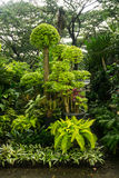 各种各样的种类植物、盆景树和花安排了象一点密林和出售由在雅加达拍的卖花人照片 免版税图库摄影