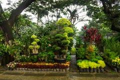 各种各样的种类植物、盆景树和花安排了象一点密林和出售由在雅加达拍的卖花人照片 库存照片