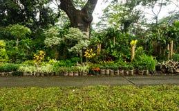 各种各样的种类植物、盆景树和花安排了象一点密林和出售由在雅加达拍的卖花人照片 免版税库存图片