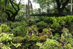 各种各样的种类盆景树出售在雅加达拍的装饰植物照片的植物商店印度尼西亚 免版税库存照片