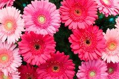 各种各样的红色蓝色五颜六色的花的选择作为背景 免版税库存图片