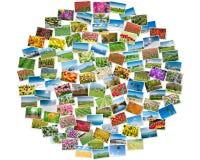各种各样的自然照片在圆的框架安排了 免版税库存照片