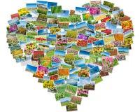 各种各样的自然照片在心脏框架安排了 免版税图库摄影