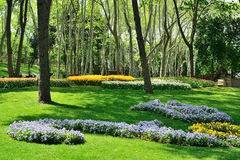 各种各样的花在公园 库存照片