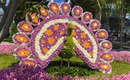 从各种各样的花的孔雀在花节日  免版税库存图片