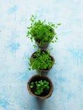 各种各样的草本幼木在泥煤罐的 免版税库存图片