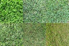 各种各样的草类型2 库存图片