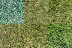 各种各样的草类型1 免版税库存图片