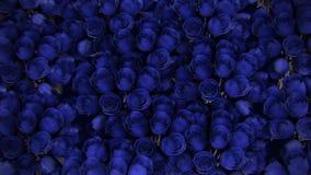 从各种各样的蓝色玫瑰的背景 向量例证