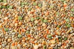 各种各样的谷物大麦米,燕麦,黑麦,豌豆,扁豆背景 图库摄影