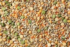 各种各样的谷物大麦米,燕麦,黑麦,豌豆,扁豆背景 免版税图库摄影