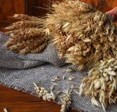 各种各样的谷物麦子、燕麦,黑麦和其他的耳朵在木的 免版税库存图片