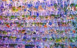 各种各样的过度拥挤淡水水族馆鱼在透明塑料袋卖了 库存照片