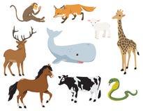 各种各样的逗人喜爱的动物 免版税库存照片