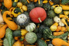 各种各样的颜色和品种的南瓜混合 图库摄影