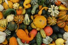 各种各样的颜色和品种的南瓜混合 免版税库存图片