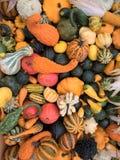 各种各样的颜色和品种的南瓜混合 免版税库存照片