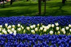 各种各样的颜色郁金香本质上在春天 免版税图库摄影