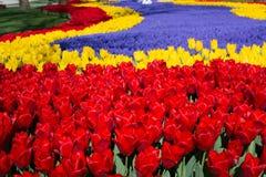 各种各样的颜色郁金香本质上在春天 免版税库存图片