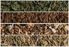 各种各样的香料种子拼贴画  荷兰芹和小茴香,晒干为腌制和茴香 大下落绿色叶子宏观摄影水 免版税库存图片
