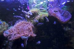 各种各样的鱼在一个萤光栖所 免版税库存图片