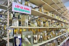 各种各样的鱼弄干保存的标本和在液体的海洋生活被存放并且显示给Oce的越南机关的游人 免版税库存照片