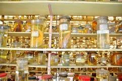 各种各样的鱼弄干保存的标本和在液体的海洋生活被存放并且显示给Oce的越南机关的游人 图库摄影